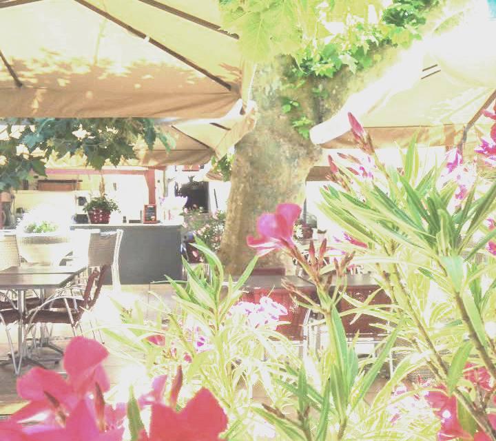 Terrasse Ombragée Les Plantes à Choisir: Restaurant à Proximité Avec Terrasse Ombragée